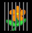 Flower Behind Bars