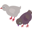 download Chickens 002 Figure Color clipart image with 315 hue color