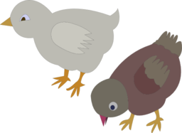 Chickens 002 Figure Color