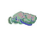 download Red Stonefish clipart image with 180 hue color