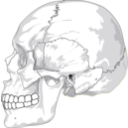 download Human Skull Side View clipart image with 45 hue color