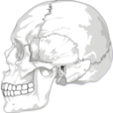 download Human Skull Side View clipart image with 225 hue color