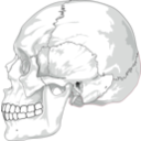 download Human Skull Side View clipart image with 315 hue color