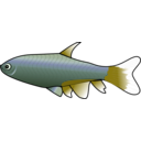 download Bloodfin Tetra clipart image with 45 hue color