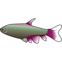 download Bloodfin Tetra clipart image with 315 hue color