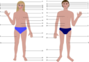 Human Body Man And Woman With Numbers