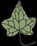 Ivy Leaf 5
