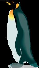 Architetto Pinguino 4