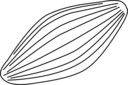 Fusulina