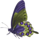 download Butterfly Papilio Philenor Side clipart image with 225 hue color