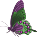 download Butterfly Papilio Philenor Side clipart image with 270 hue color