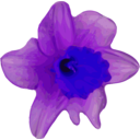 download Crocus clipart image with 225 hue color