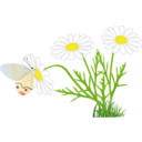 A Butterfly On A Daisy
