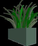 Grass In Square Planter
