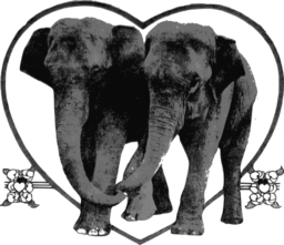 Lover Elephants