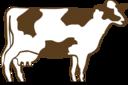 Architetto Vacca Pezzata Rossa