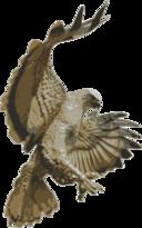 Hawk Pouncing