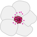 download Cherry Flower clipart image with 270 hue color