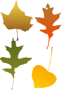 Autumn Leaf Selection