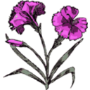 download Carnation clipart image with 315 hue color