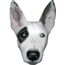 Highres Bullterrier Head