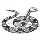 Copperhead Grayscale