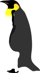 Architetto Pinguino 2