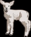 Young Lamb