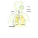 download Respiratory System clipart image with 45 hue color