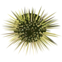 download Sea Urchin clipart image with 45 hue color