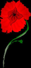 Freeform Poppy