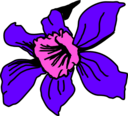 Orquidea Colombia