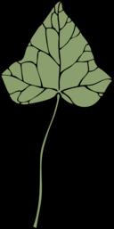 Ivy Leaf 7