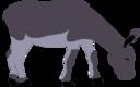 Wild Donkey By Rones