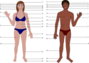 Human Body Both Genders With Numbers