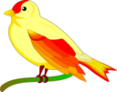 Bird Of Peace Mauro Oliv 01
