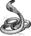 Cobra Grayscale