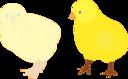 Chicks Figure Color