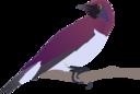 Exotical Bird
