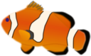 Aquarium Fish Amphiprion Percula