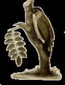 Picus Erythropygius