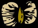 Birch Seed