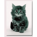 download Sweet Kitten clipart image with 135 hue color