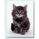 download Sweet Kitten clipart image with 315 hue color
