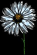 Colored Daisy 1