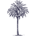 download Date Palm clipart image with 135 hue color