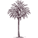 download Date Palm clipart image with 225 hue color