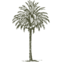 download Date Palm clipart image with 315 hue color