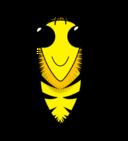 Wax Wild Bee2