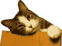 Relaxed Cat Bg Removed